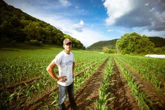 farm harvest row crop