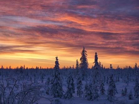 Sunrise over the Taiga Forest near Tsiigehtchic