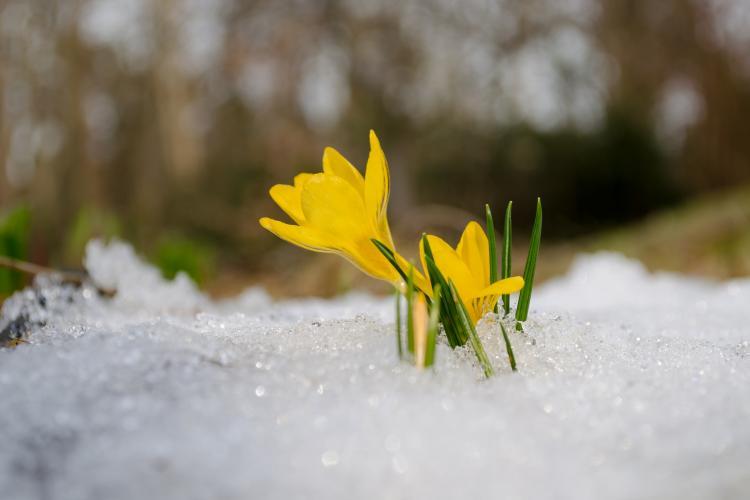 Pavasaris nāk