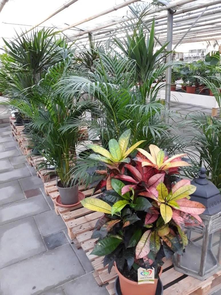 Tuinplanten  Kamerplanten  Potterie  Jonkheer