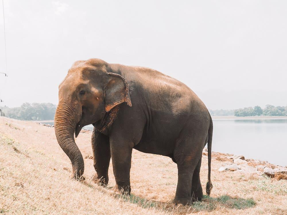 sri lanka trip, visit sri lanka, sri lanka tourists places, sri lanka itinerary, places to visit in sri lanka, sri lanka holidays, best places to visit in sri lanka, tourist attractions in sri lanka, sri lanka tourist places, best beaches in sri lanka, what to do in sri lanka, sri lanka attractions, sri lanka blog, beautiful places in sri lanka, best places in sri lanka, sri lanka points of interest, things to see in sri lanka, sri lanka beaches, udawalawe safari, udawalawe safari tour, udawalawe national park, udawalawe, uda walawe, udawalawe safari price, udawalawe accommodation, sri lanka safari, udawalawe national park accommodation, udawalawe national park jeep safari, 2 weeks in sri lanka itinerary, sri lanka itinerary, 2 weeks in sri lanka, sri lanka itinerary 3 weeks, two weeks in sri lanka, sri lanka two week itinerary, sri lanka travel itinerary, sri lanka travel guide, best itinerary for sri lanka