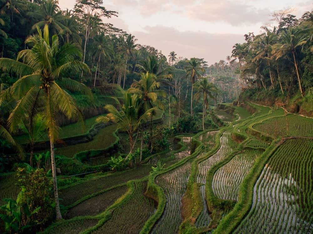 tegallalang rice terraces, tegallalang rice terrace, tegalalang rice terrace, tegalalang rice terrace, tegalalang ubud, tegallalang ubd, bali rice fields, bali rice terraces, ubud rice terraces, things to do ubud