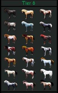 blackdesertonlinebreedinghorse8