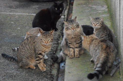 Prochaine campagne de stérilisation des chats errants : du 2 au 12 mai inclus