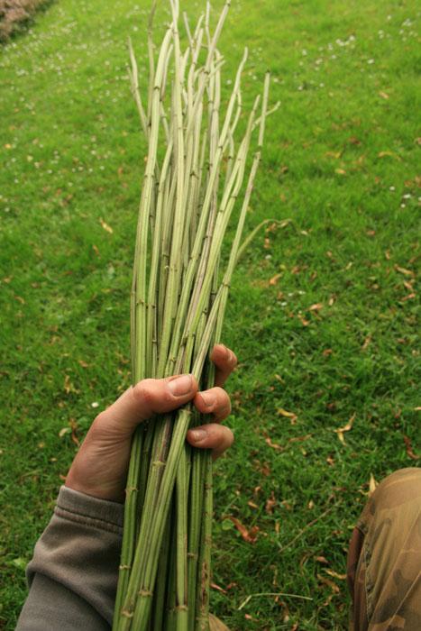 How to make Nettle cordage jonsbushcraftcom