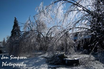 Ice Trees (12 of 15)