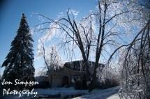 Ice Trees (14 of 15)