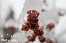 Ice Trees (2 of 15)