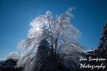 Ice Trees (5 of 15)