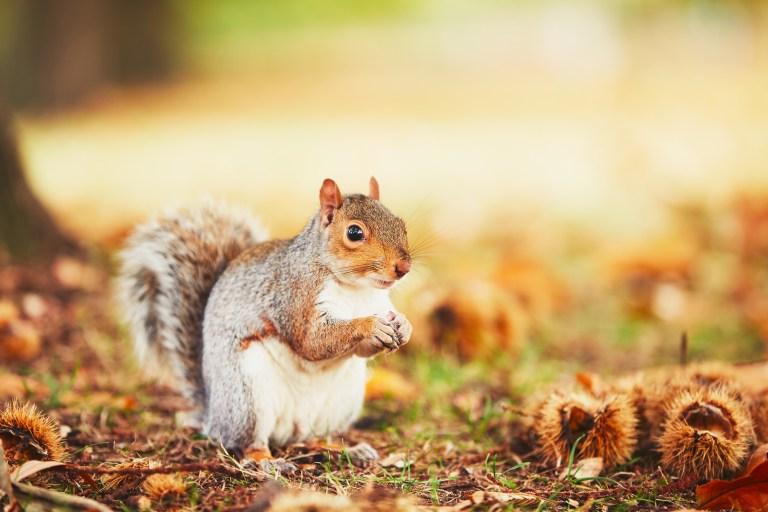 Spirit of the Squirrel