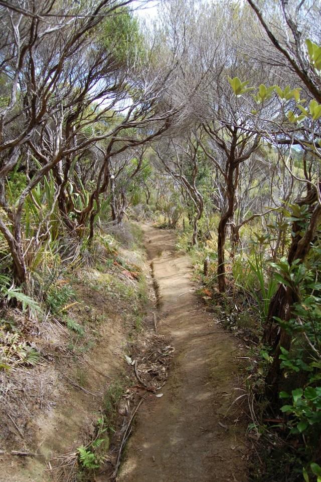DSC_0157 Walker Ridge Track