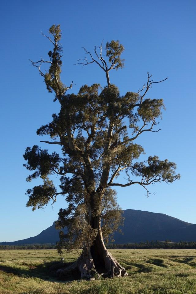 dsc04345-cazneaux-tree