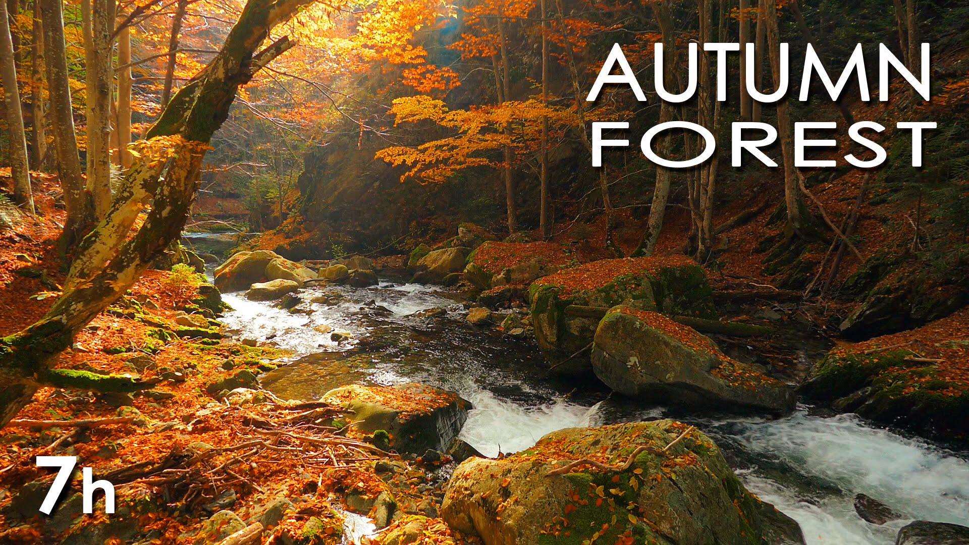 Leaf Wallpaper Wet Fall Free Photo Autumn River Season Scenic Serene Free