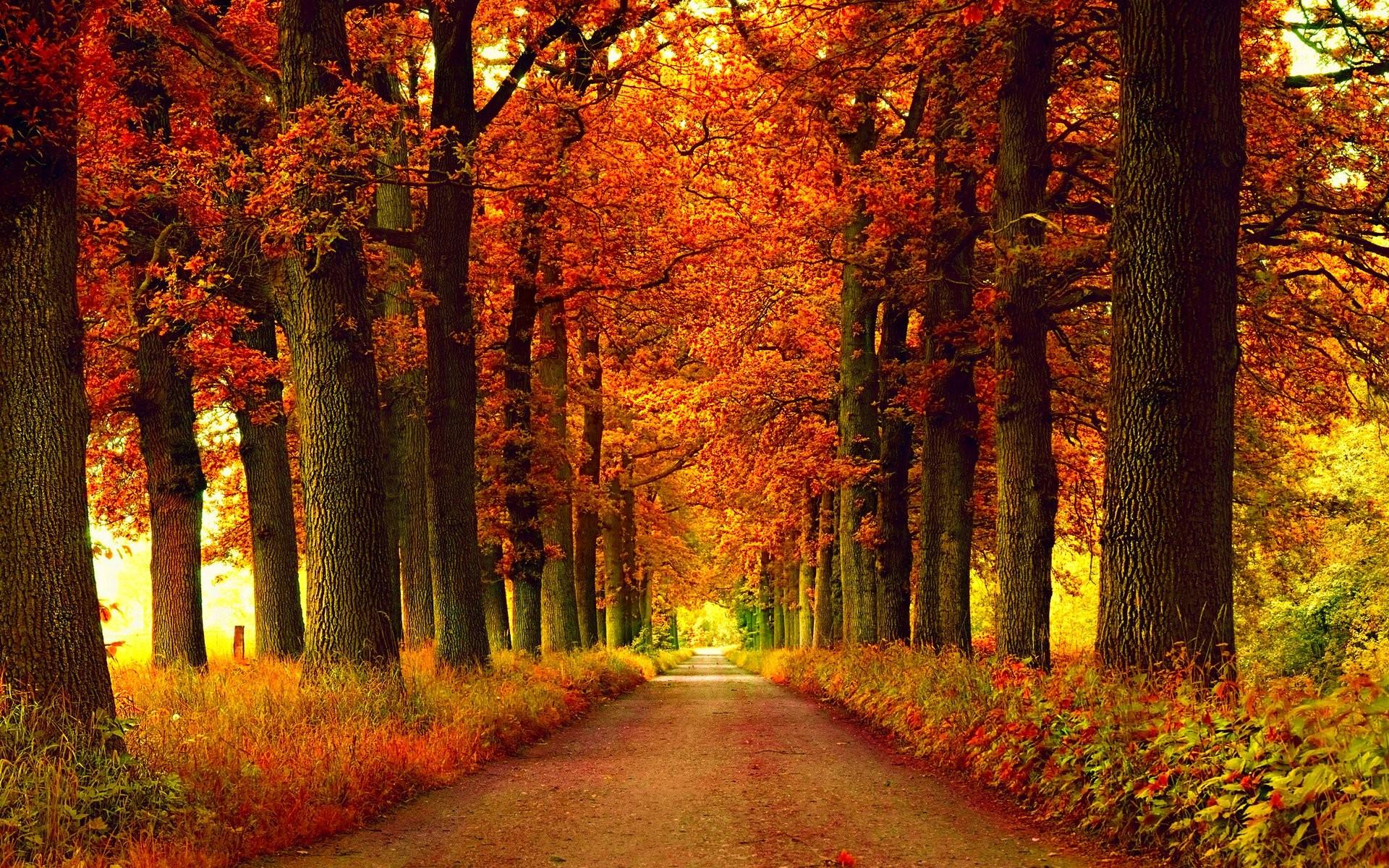 Free Computer Wallpaper Fall Leaves Free Photo Autumn Season Autumn Dry Fall Free