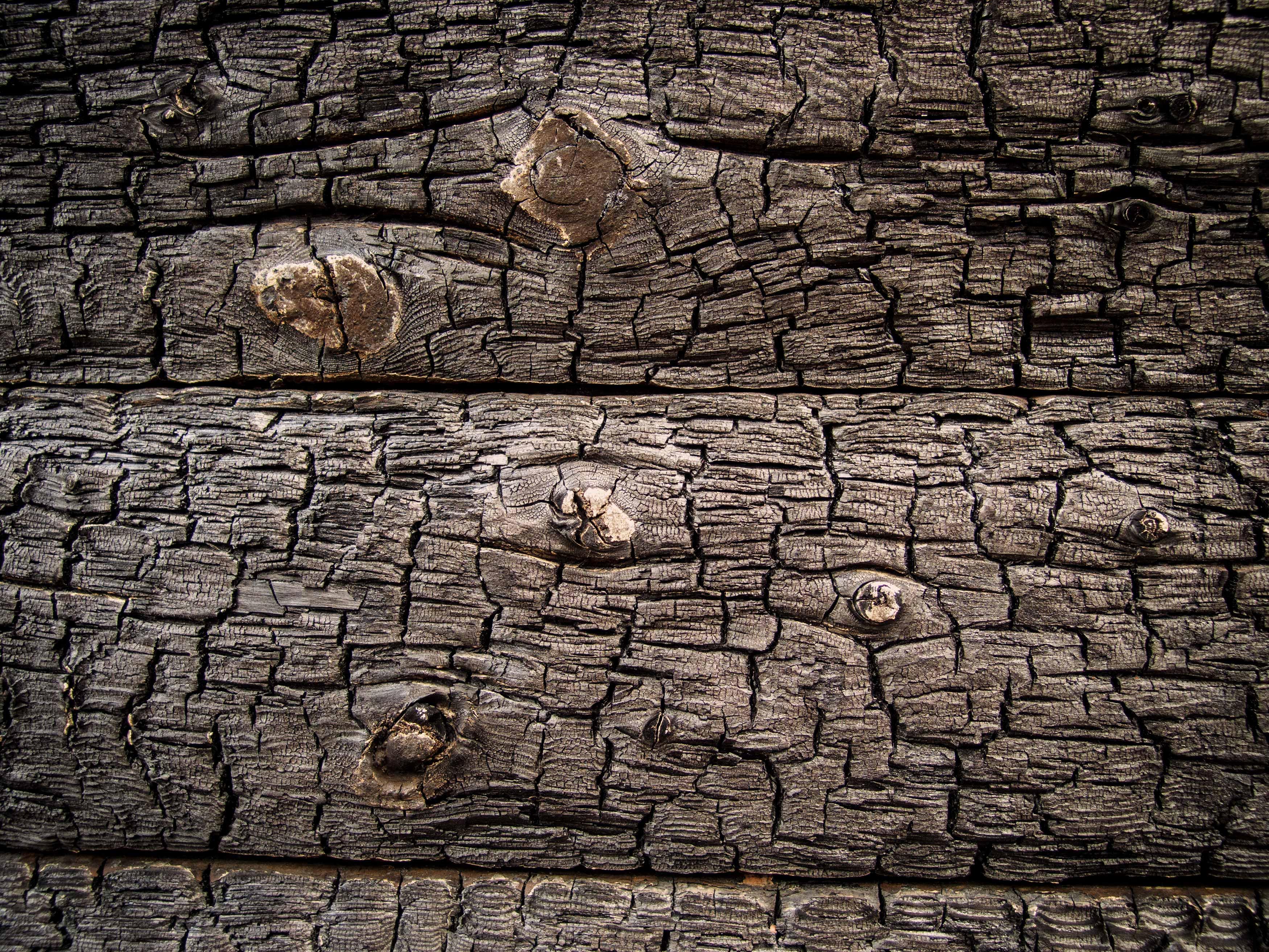Fall Wooded Wallpaper Free Photo Charred Wood Texture Backdrop Somadjinn