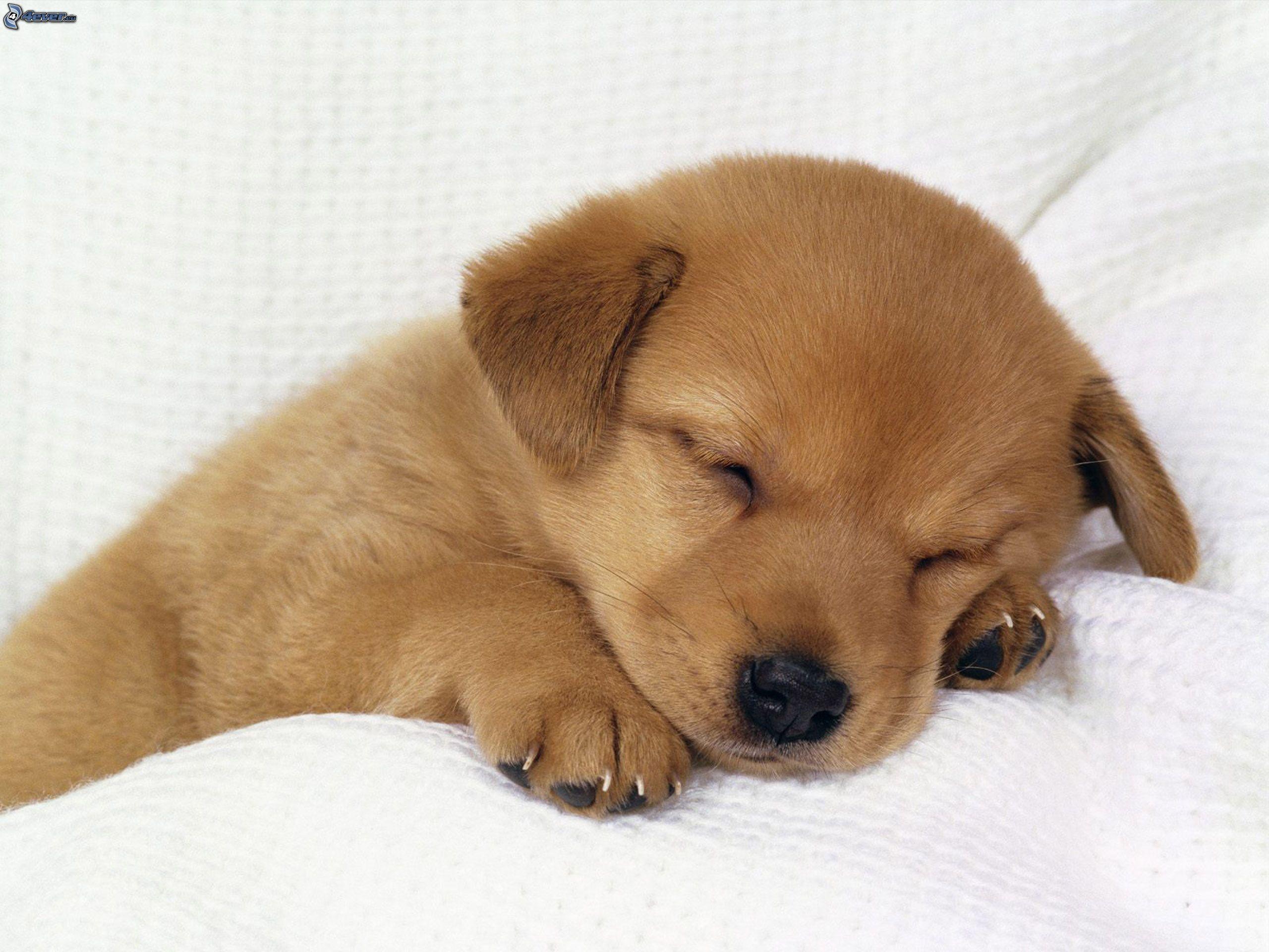 Free Photo Cute Sleeping Puppy Baby Face Sleepy Free Download Jooinn