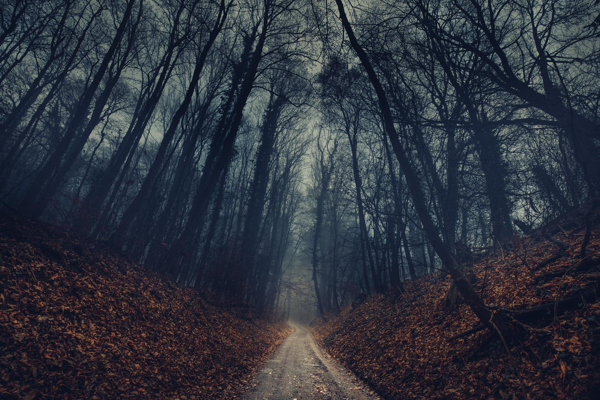 Fall Flowers Wallpaper Desktop Free Photo Forest Path Scary Wood Tree Free