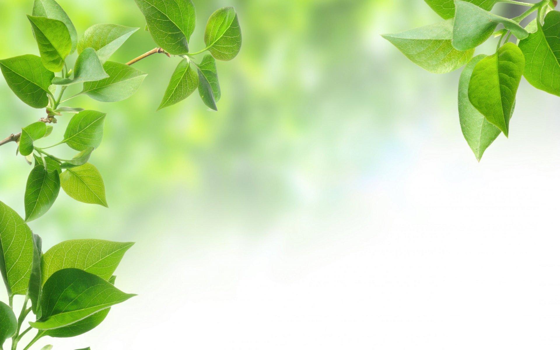 Free Photo Green Leaves Background Green Light Leaf