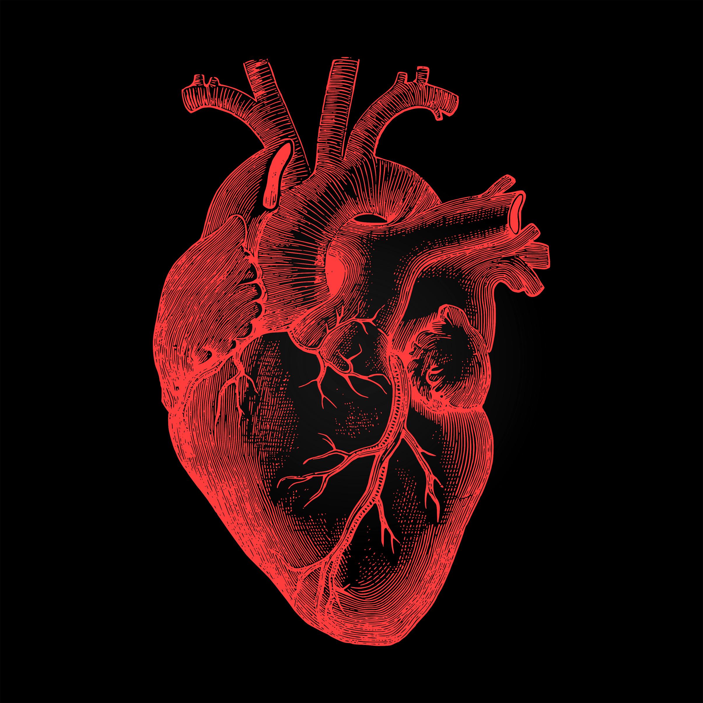 Free Photo Human Heart