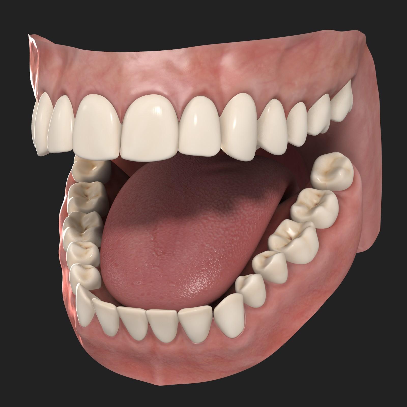 Free Photo Human Teeth
