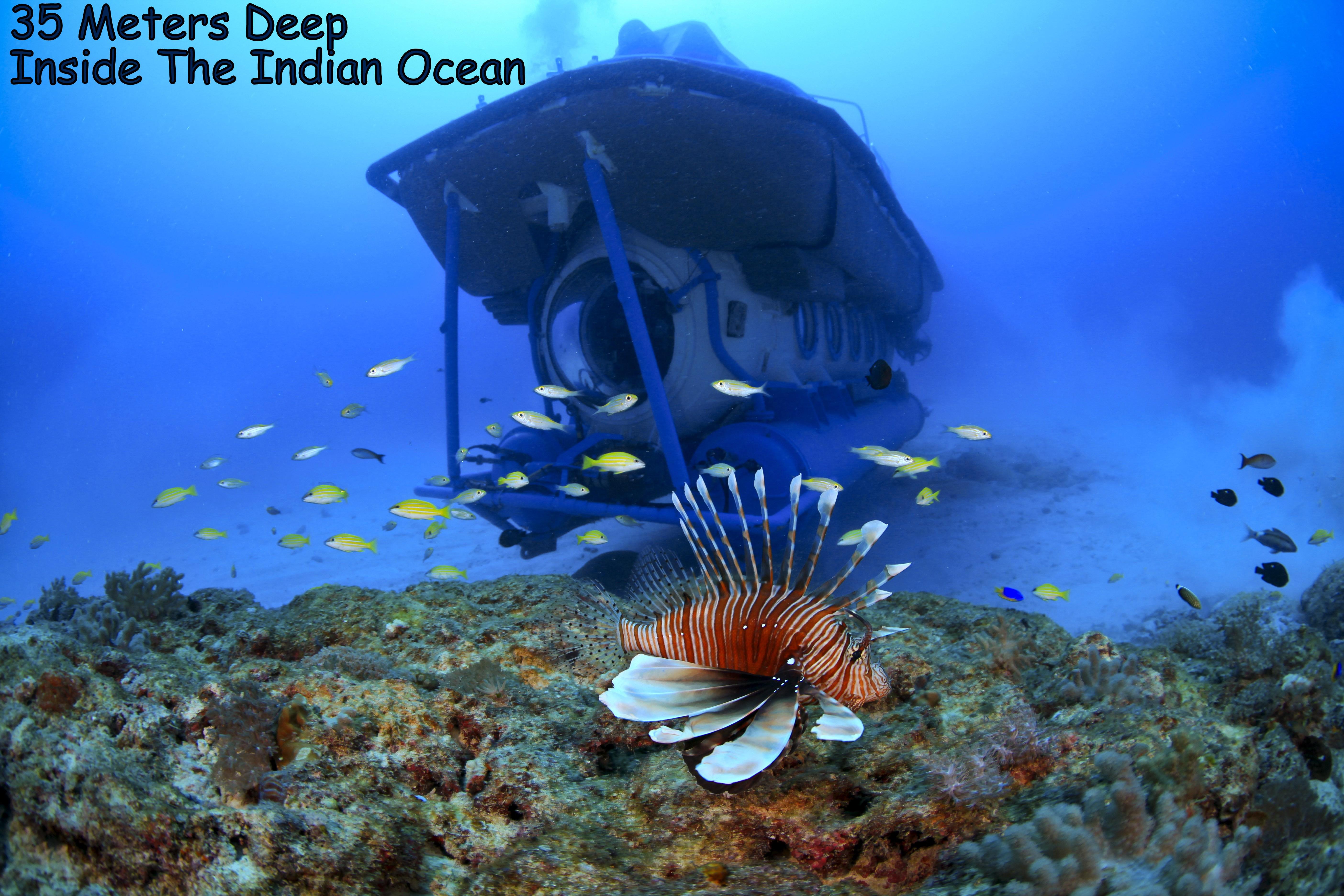Free Photo Inside The Ocean