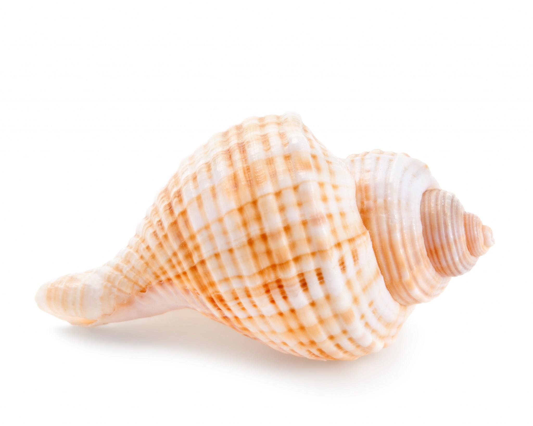 free photo seashell sea
