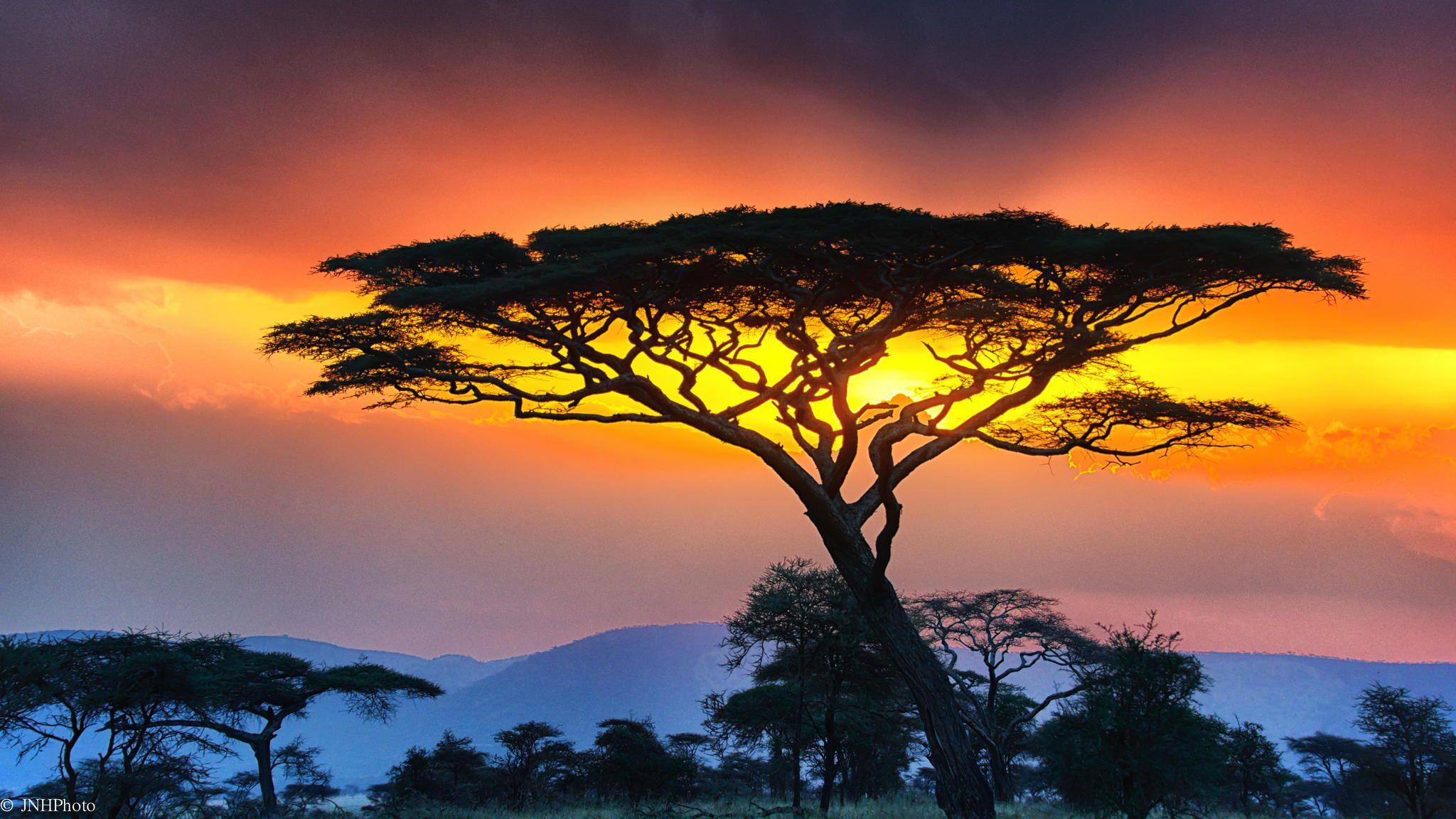 Fall Forest Hd Wallpaper Free Photo Serengeti Sunset Dark Evening Landscape