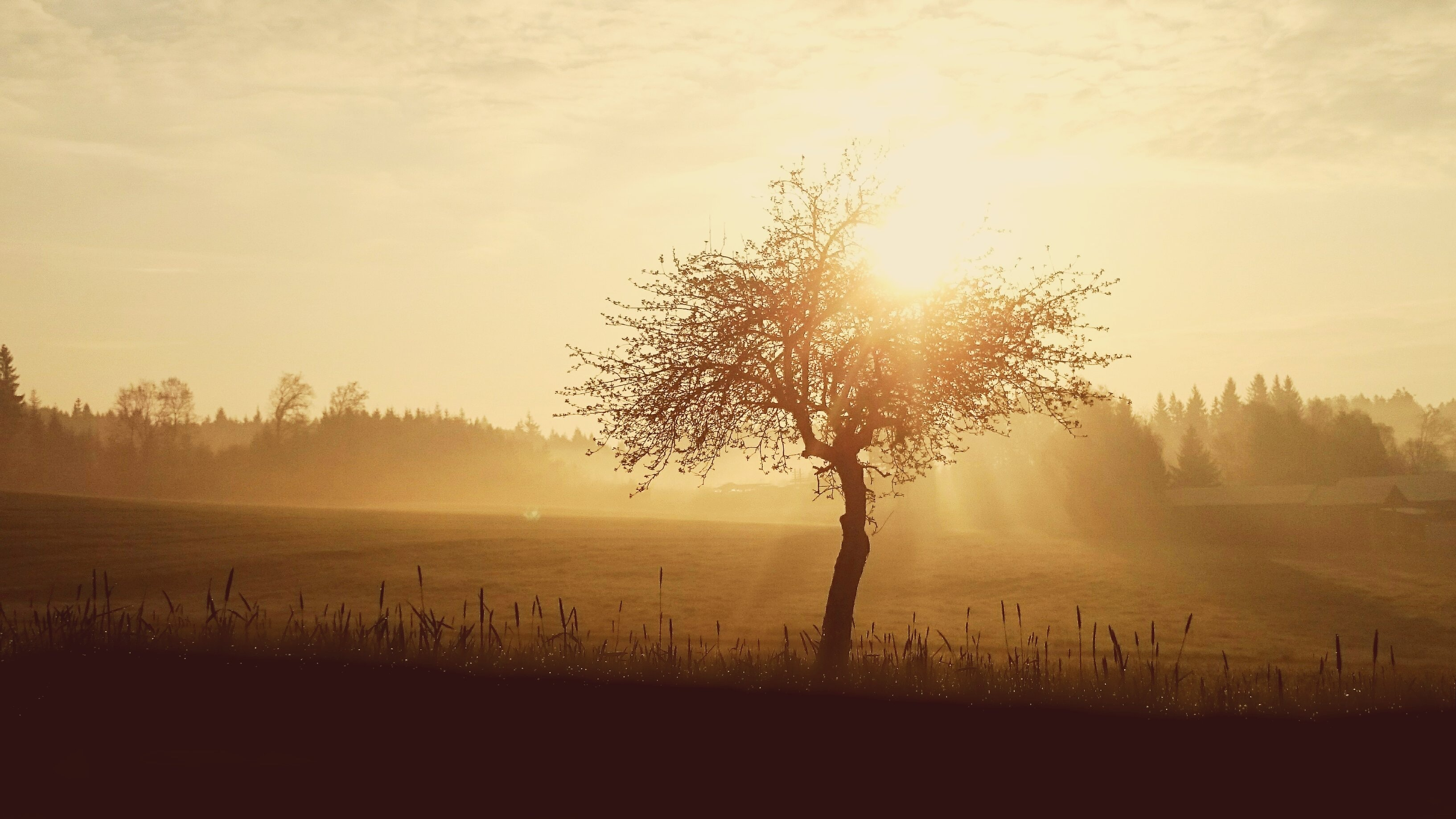 Fall Dog Wallpaper Free Photo Silhouette Of Tree During Sunset Summer