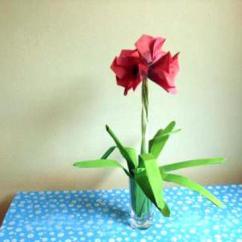 Lotus In Water Plant Diagram Blank Dna Joost Langeveld Origami Page
