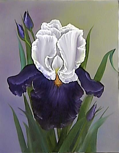 Iris - 001 Steve (97)