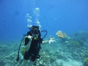 Diving -AQABA (RED SEA - Jordan Tours