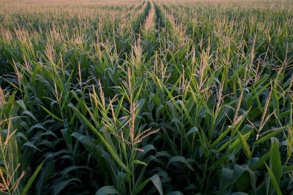 lancaster_pa-commercial_arial_agricultural_farm_produce_photographer_jordan_bush_photography_24 Agriculture