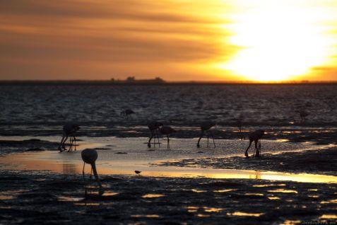 Flamingo Sunset