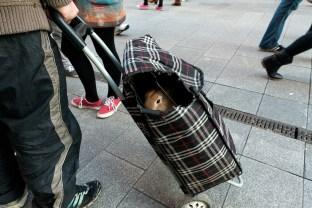 Homeless bunny / Dublin