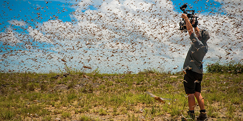 A photographer surrounded by a swarm of locusts