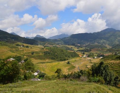 sapa-rice-terraces-904