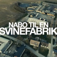 Naboer til store svinefabrikker føler sig magtesløse