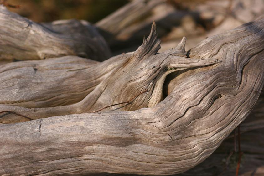Nantucket beach driftwood