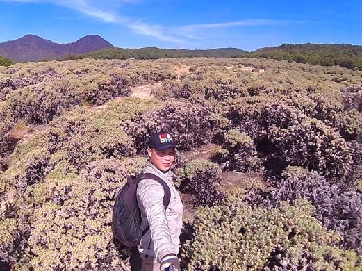 Bisa dikatakan Tegal Alun merupakan rimbanya Edelweis dan merupakan padang Edelweis paling luas di Indonesia.