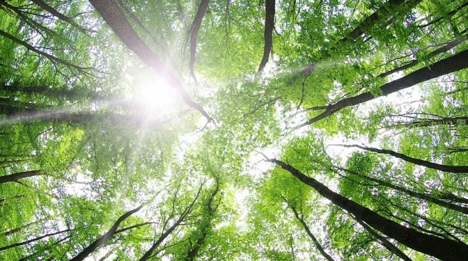 El árbol De Tu Vida - JorgeMelendez.com.mx