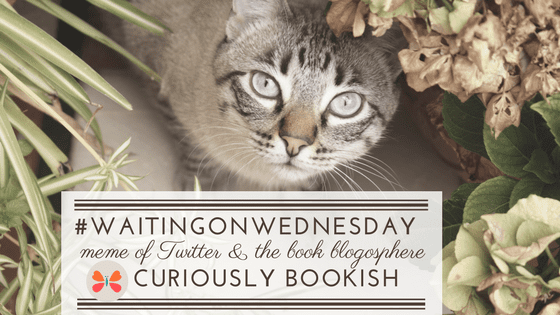 #WaitingOnWednesday badge created in Canva by Jorie using Unsplash.com photography (Creative Commons Zero).