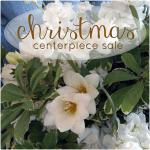 Christmas flowers, centerpieces, Lubbock, TX