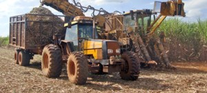 Alternativa de fertilizante é meta de parceria da USP com Dinamarca