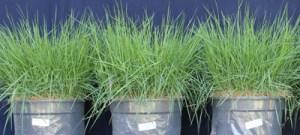 Resíduos de construções podem ser reciclados como substratos para plantas