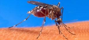 Projeto da USP de combate ao zika será financiado por agência americana