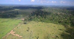 Falta disposição do governo contra desmatamento, diz professor da USP