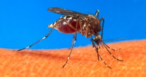 Colaboração da população é vital no combate ao mosquito da dengue