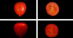 Descoberta forma de produzir tomates sem sementes
