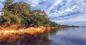 Restauração de áreas em torno de rios propicia vazão estável