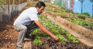 Reforma agrária e soberania alimentar são temas de evento on-line